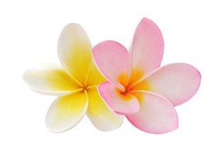 Bussaba Massage image of flower