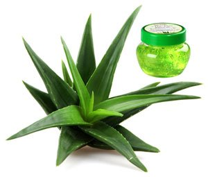 Massage oil Aloe-Vera
